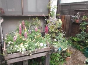 1  ラ・フィーユさんのイベントかわいい花がいっぱいです。